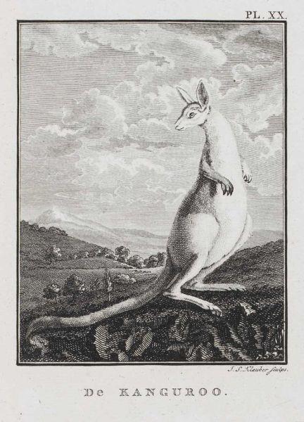 De Kanguroo