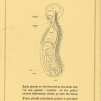 Glands Build Up the Body