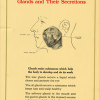 Glands and Their Secretions